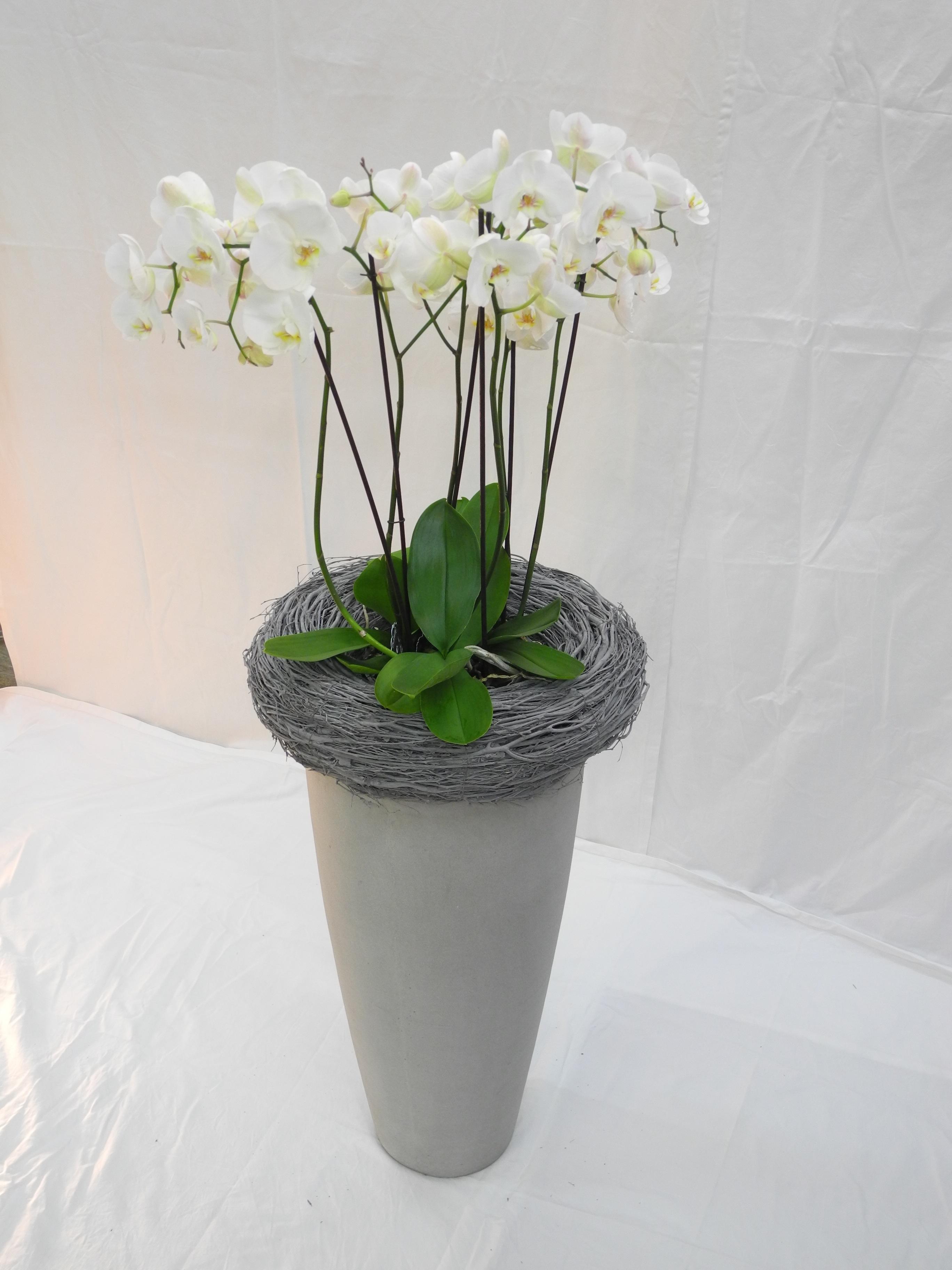 Firmenkunden hydrokultur blumen jast for Blumen hydrokultur